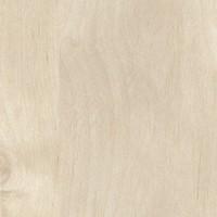 5730 - אלמון אפור